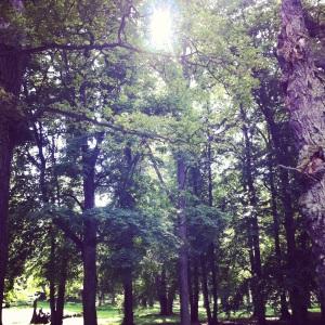 Slottsparken, Ulriksdal, Stockholm. En fantastiskt vacker plats. En plats för drömmar.