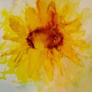 akvarell-solros